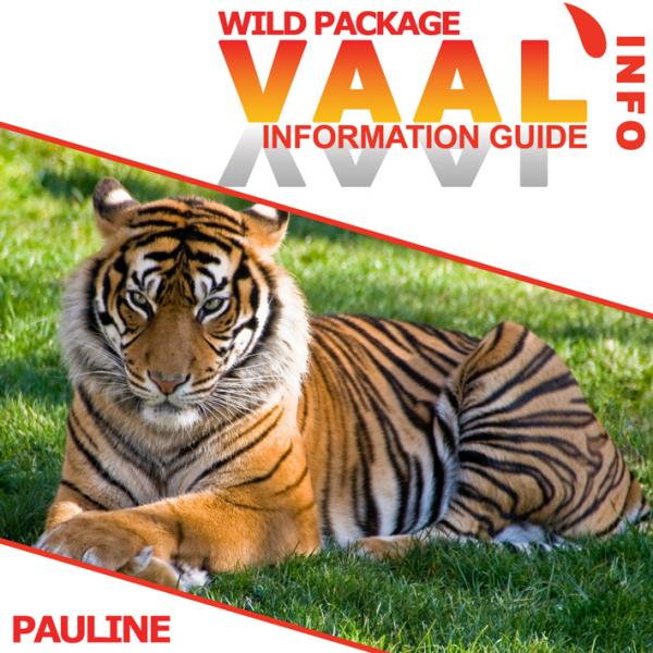 Pauline Business Wild (Demo)